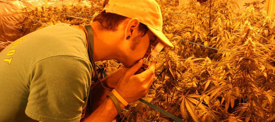 Comprendre les drogues illégales