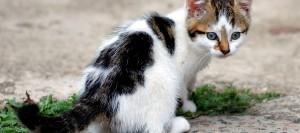 d'éveil pour petits chatons